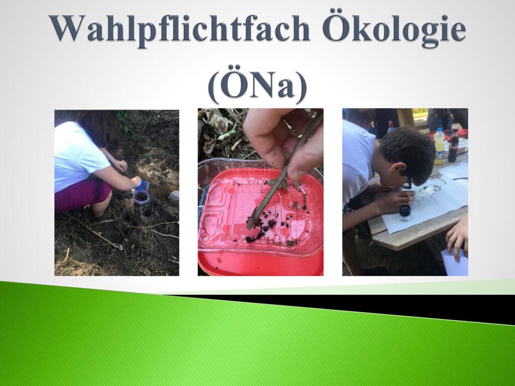 Ökologie-&-Naturwissenschaften_Seite_1