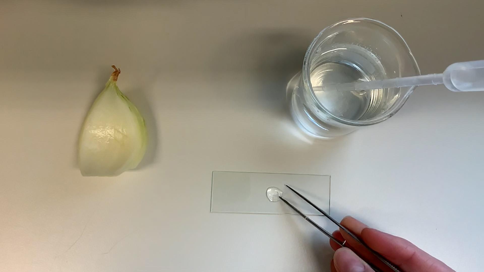 Vorschaubild Video Biologie & Naturwissenschaften - Mikroskopieren Tag der offenen Tuer